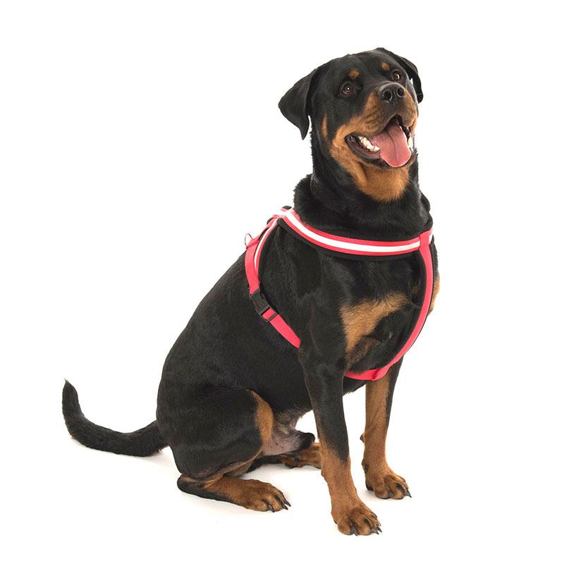 Perro collares correas arneses nylon arn s for Estanque reflectante