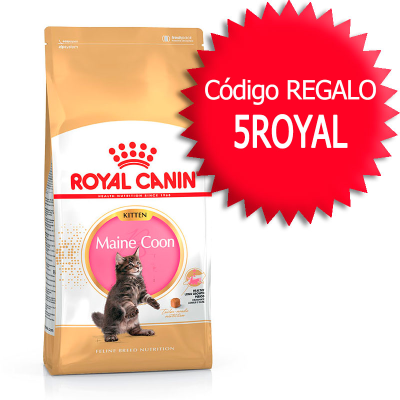 gato alimentaci n royal canin breed feline royal canin gato kitten maine coon 10kg. Black Bedroom Furniture Sets. Home Design Ideas