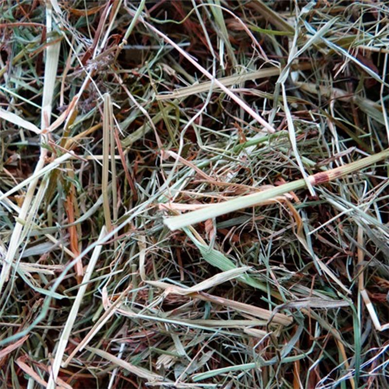 Witte Molen Hay