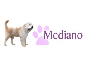 Perro antiparasitarios para perros antipara perro mediano for Puertas perros medianos