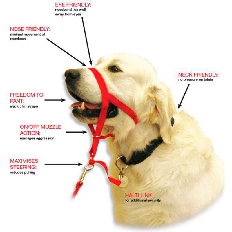 Dog Collar Training Guide