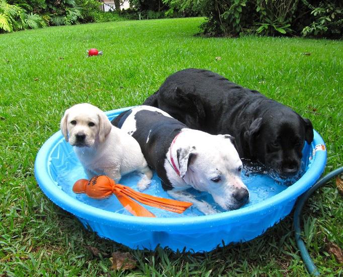 perro accesorios para el verano piscina para perros