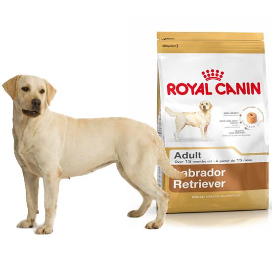 dog dog food royal canin breed health nutrition royal canin labrador retriever 30 adult. Black Bedroom Furniture Sets. Home Design Ideas