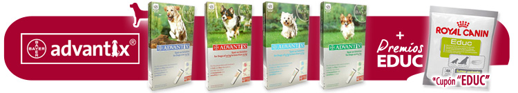 Antiparasitario Perro Externo Pipetas Advantix +Regalo Dental Care Stick
